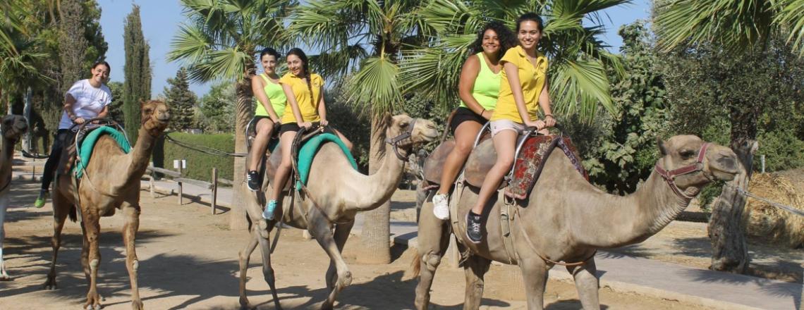 CamelPark, верблюжья ферма в Ларнаке