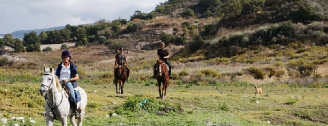 Horse Riding Centre, Ride in Cyprus, in Paphos