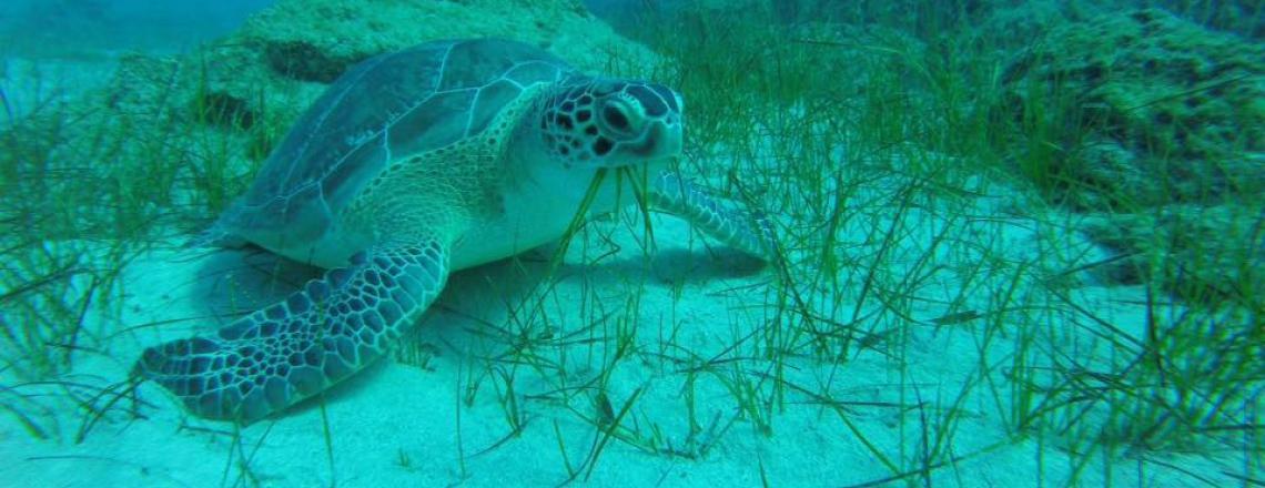 Дайвинг-центр Ocean View Diving — дайвинг и морские круизы с погружением в Айя-Напе