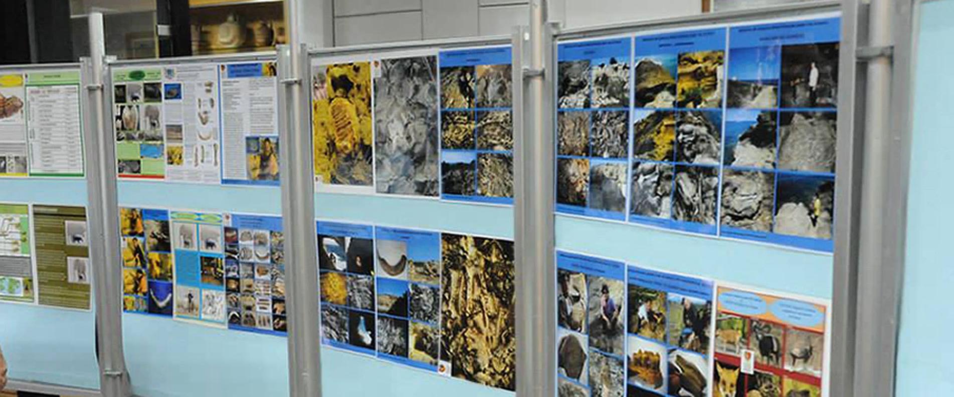 Музей естественной истории и экскурсия на производство Карлсберг