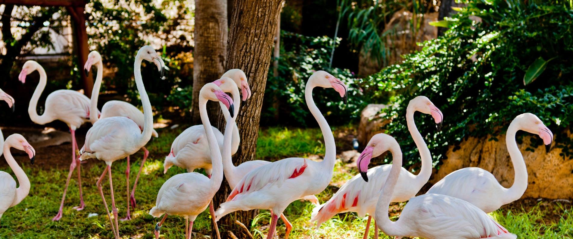 Зоопарк в Лимассоле, фоторепортаж