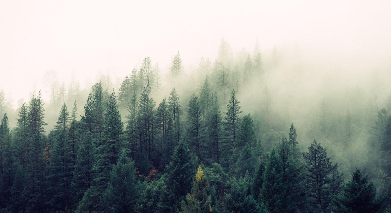 «Как в тумане»: подборка фильмов для тех, кто устал от жары